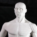 How to sculpt your own Écorché anatomy figure
